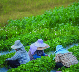 migrant worker story