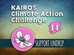 Day 14 - Climate Action Challenge