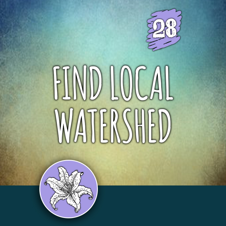 ACTION 28: Find local watershed