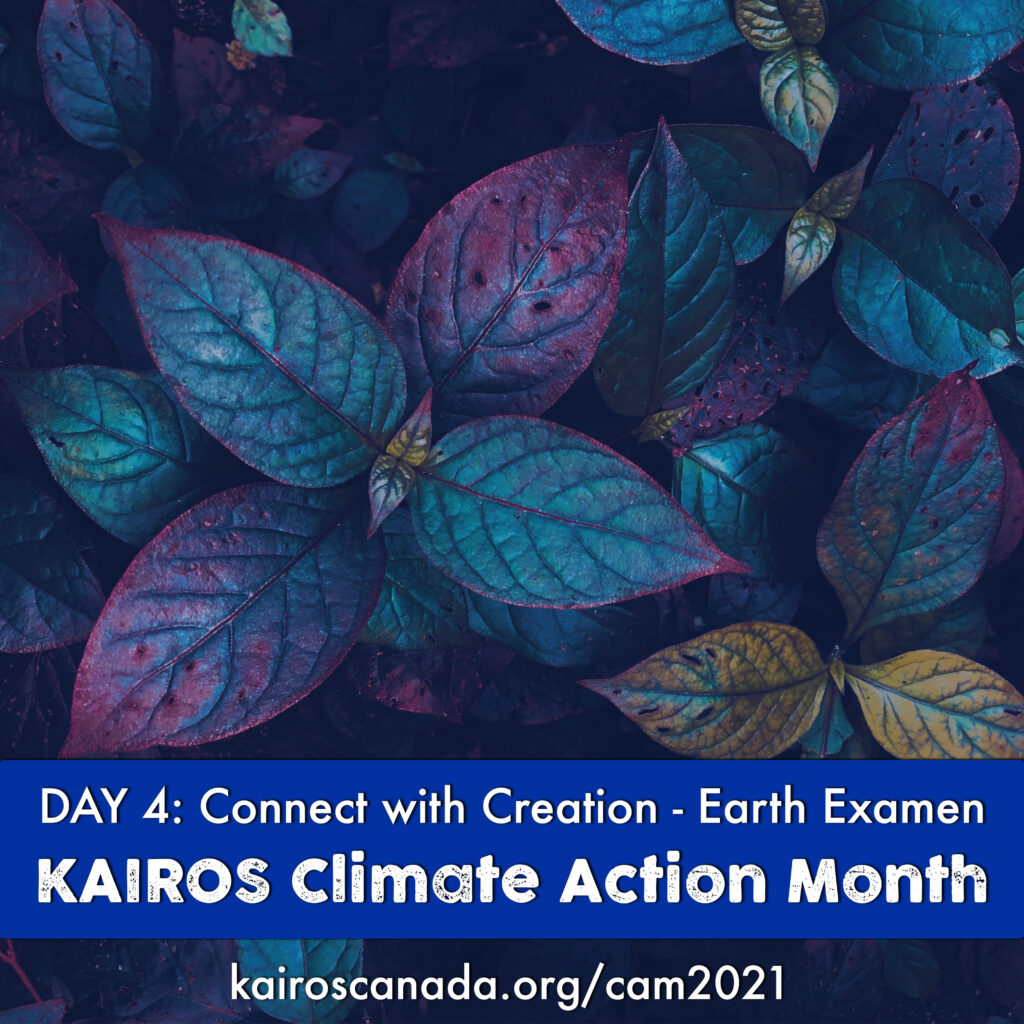 DAY 4 of Climate Action Month: connect with Creation - Earth Examen